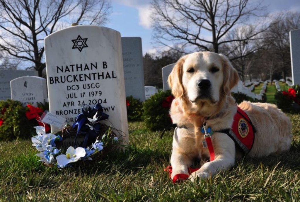 arlington cemetery pets